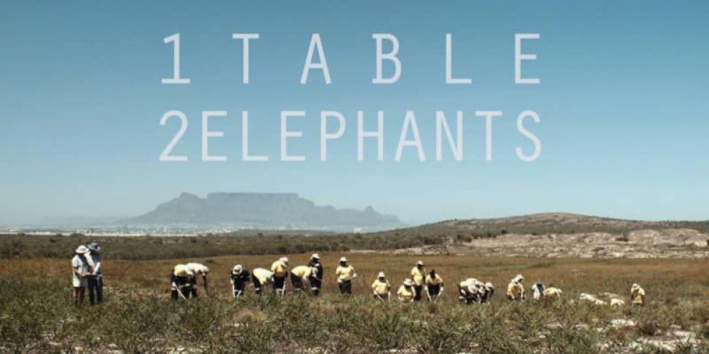 1 Table 2 Elephants: a film essay about bushmen bboys, a flower kingdom and the ghost of a princess (5 min teaser)